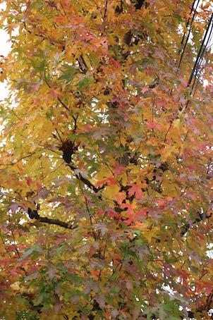 色とりどりの秋色