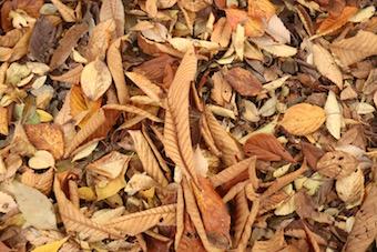 枯れ葉だってこんなに素敵